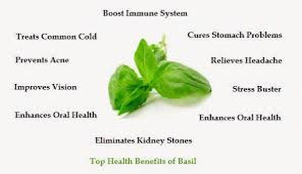 Top Ten Health Benefits Of Basil