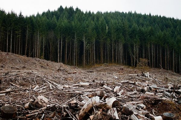forest-cutting