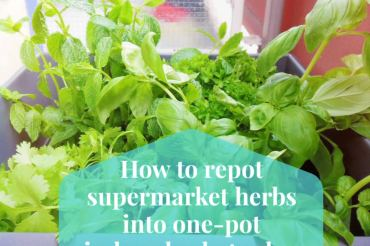 How to repot supermarket herbs into one-pot indoor herb garden