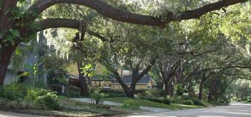 Allendale Terrace: Estate Homes in Historic St. Petersburg