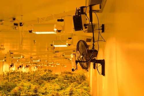 Medical marijuana plantation