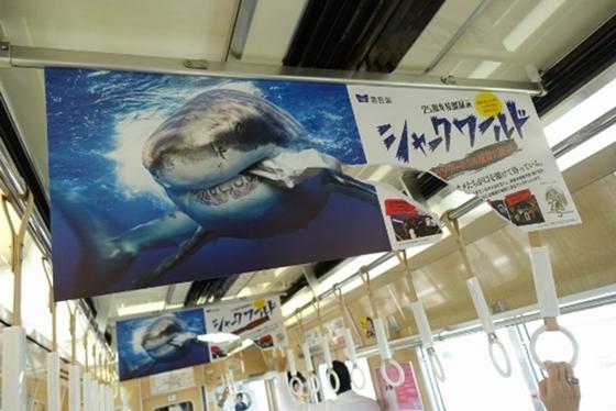 いまにも飛び出しそうなサメ!インパクト大。