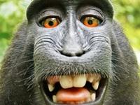 サルに著作権は、ない?! - 広告生活