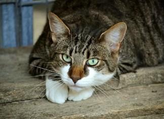 spara-contro-gatti
