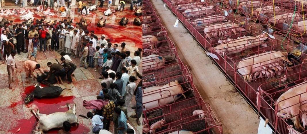 festa-sacrificio-islam-mattanza animali