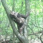 satanismo1-boschi-varesotto