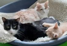 gatti-arluno-simona-rimoldi-volontaria