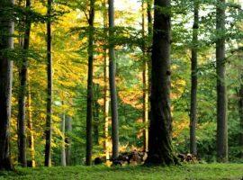 9.323,8 hectare de pădure din județul Mureș vor rămâne în proprietatea statului