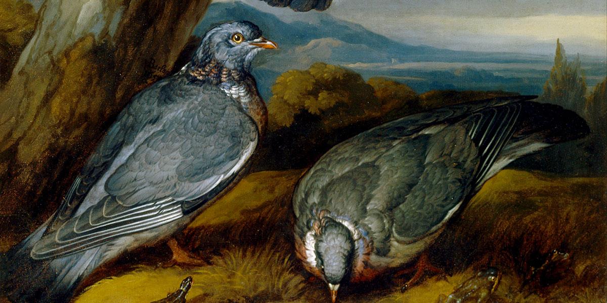 Jay, Green Woodpecker, Pigeons, and Redstart. Francis Barlow