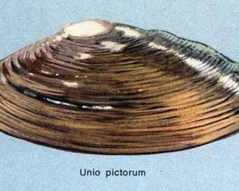 unio_pictorum-500