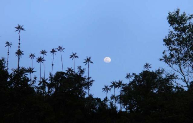 La luna tra gli alberi della Valle de Cocora