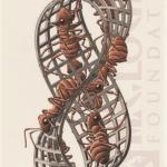 MC Escher Ants Moebius Strip