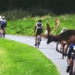 A Deer Picks The Winner