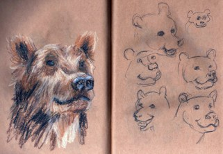 croquis-ours-libou