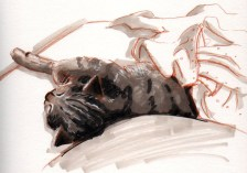 croquis-sieste-chat-libou