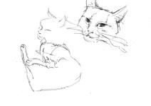 etude-chat-libou