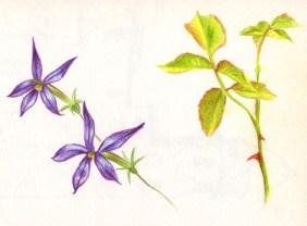 fleurs-plantes-crayon