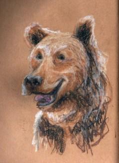 portrait-ours