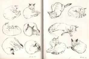 sleeping-cat-sketch