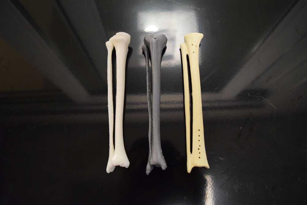 3D printed fibula and tibia print comparison