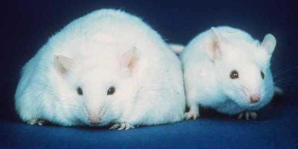 efectos disruptores endocrinos en obesidad