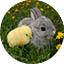Un conejo y un pollito, adorables
