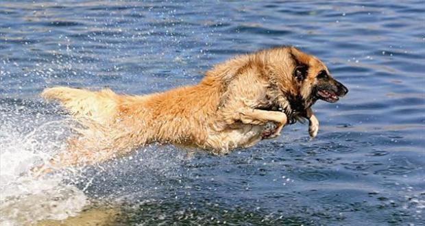 pas u moru
