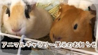 *パティ&ルンルンさん、西新井アリオ出店のお知らせ