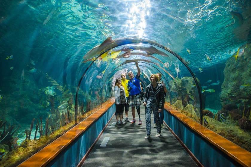 Teneriffa-78-Loro-Paque-Aquarium