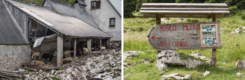 slowenien-schafe-krn-bergsee-triglav-nationalpark