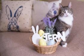 Sitz die Katze passend, sofort auf den Auflöser drücken …