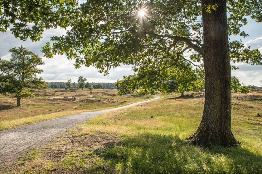 Radweg im Nationalpark Drents-Friese Wold