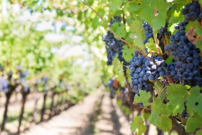 La producción mundial de vino cae un 10%