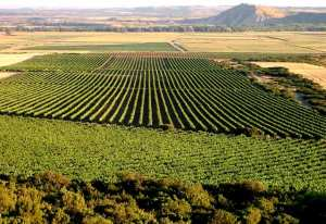 ruta-del vino-navarra-bodegas