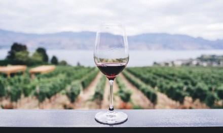 Latinoamérica: 5 rutas del vino para amantes del enoturismo