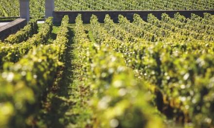 Borgoña 2019: apuntes sobre su informe de cosecha