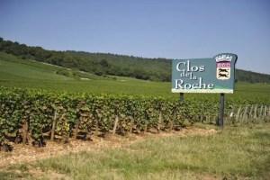 El viñedo Clos de la Roche en Morey-Saint-Denis