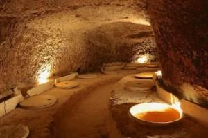 Terres dels Alforins: vinos ecológicos de parcela 1