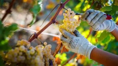 Apoyo al sector vitivinícola