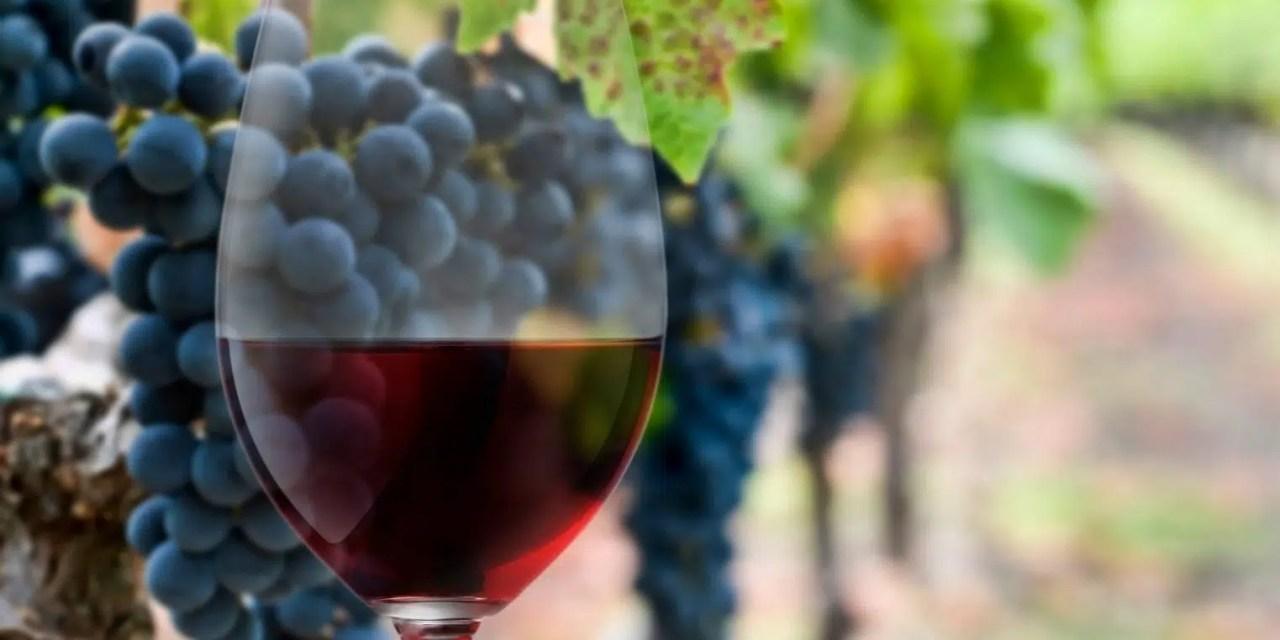 Vino tinto: 3 uvas tintas que compiten por el puesto cimero