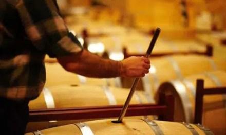 Composición del vino en sus 3 etapas: uva, mosto y vino