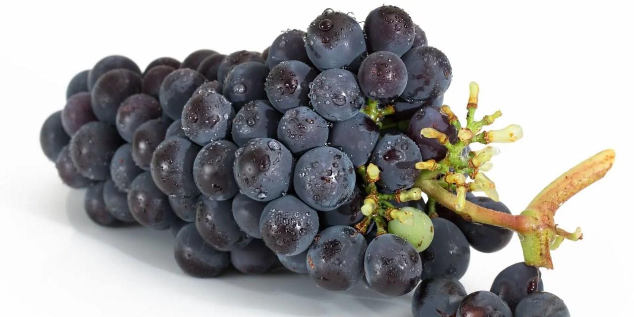 Morfología de la uva: 3 zonas para explorar
