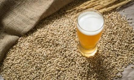 El proceso de elaboración de la cerveza (Parte 2): la levadura