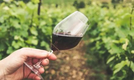 El vino moderno: prejuicios y batallas contemporáneas (Parte 2)