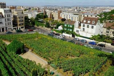 viñedos urbanos