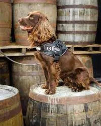 destilería de whisky Grant's de Girvan