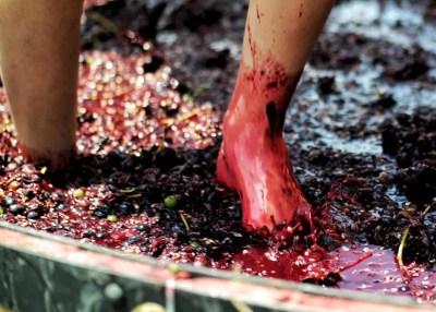 Pisa de uva