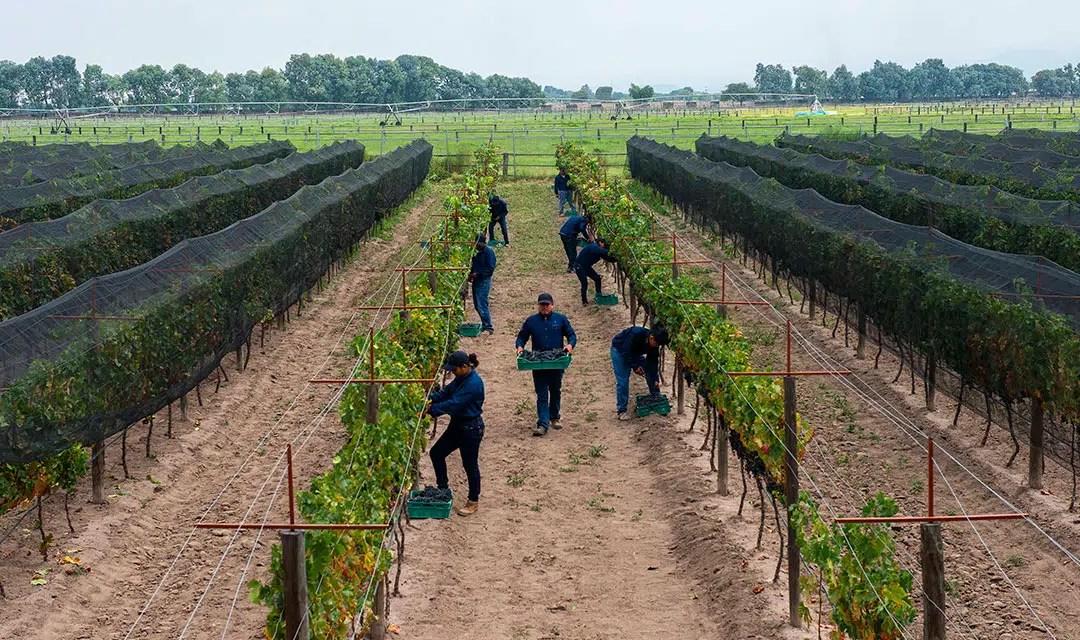 El vino potosino y su renacimiento en México