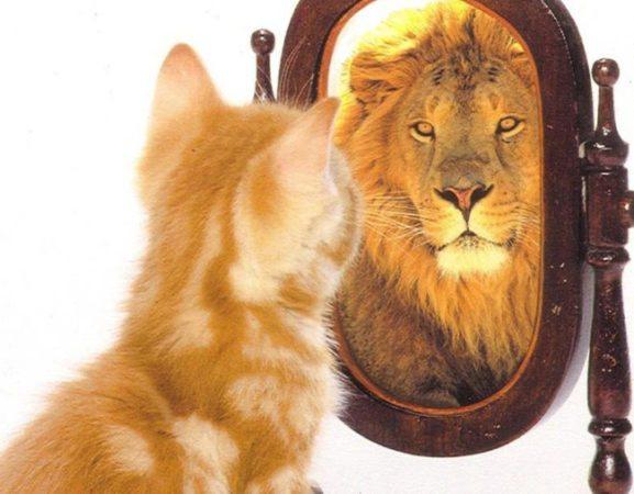 Lion, quando il ritardo è cronico...