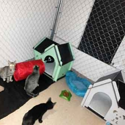 Private Rooms For The Rescue Cats Of Keno's Rescue